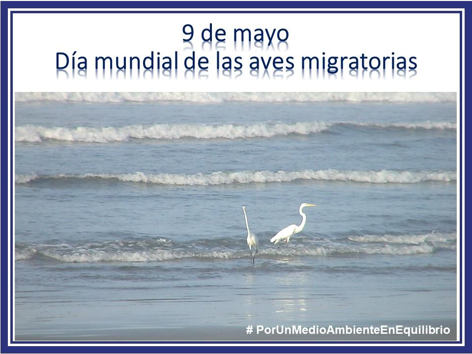 09 mayo Migración aves