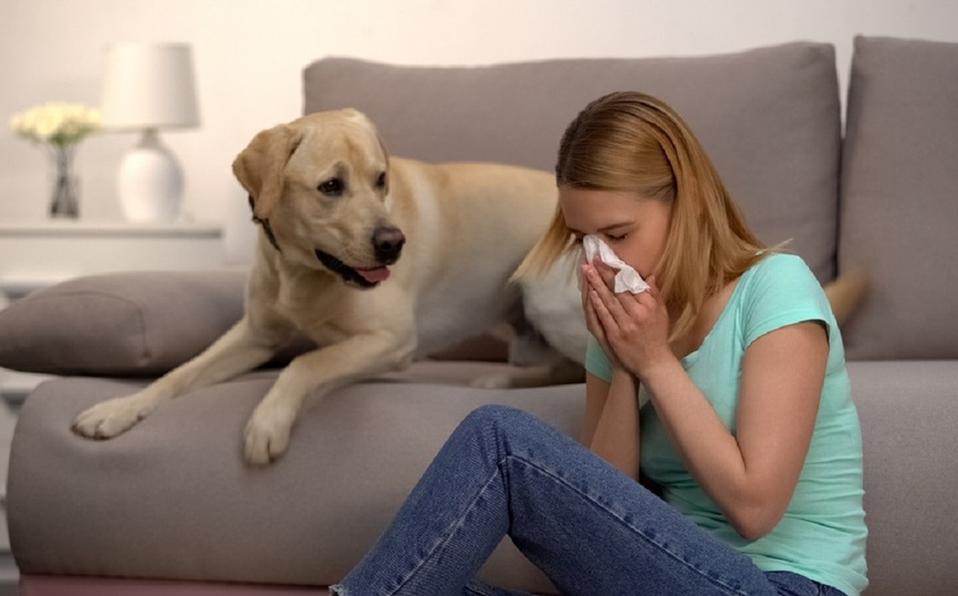 Pequeña reflexión sobre la pandemia y las mascotas perros y gatos