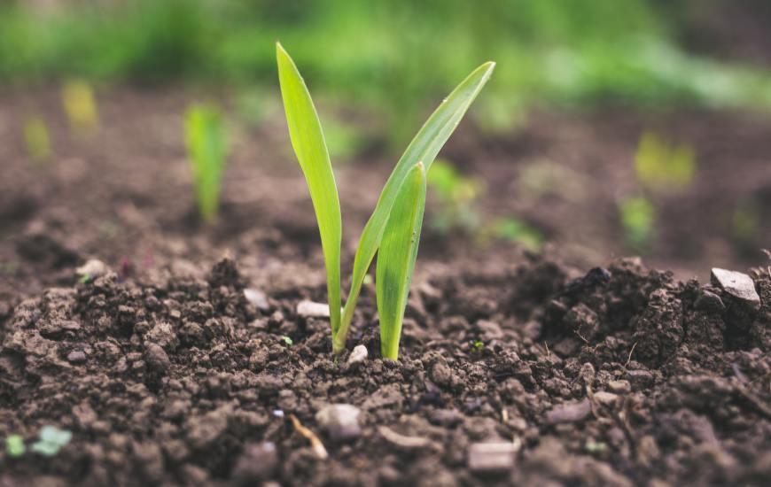 Congreso Internacional de las Ciencias Agropecuarias (AGROCIENCIAS 2021), del 17 al 21 de mayo del 2021 en el Palacio de las Convenciones de La Habana, Cuba
