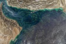 Aplicación de datos del mes: Floraciones de algas nocivas