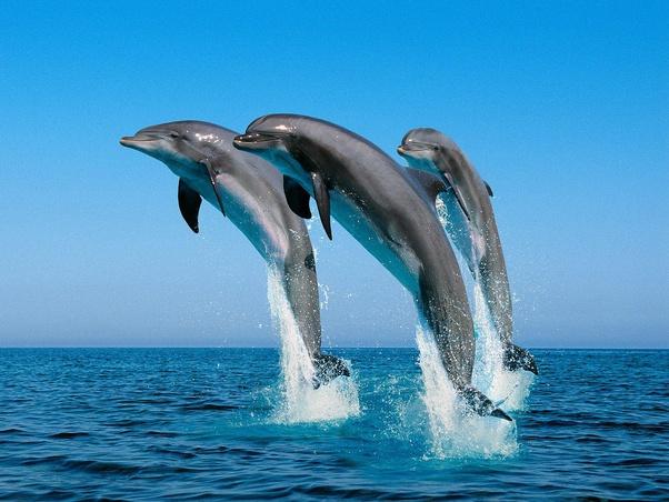 ¿Es ilegal comer delfines en EE.UU? ¿Por qué?