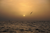 La temperatura del mar promedió los 19 grados durante diciembre en Mar del Plata