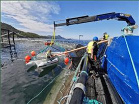 Uso de las ecosondas para estimar la densidad de los peces en jaulas de cultivo Categoría: Sistemas de Cultivo
