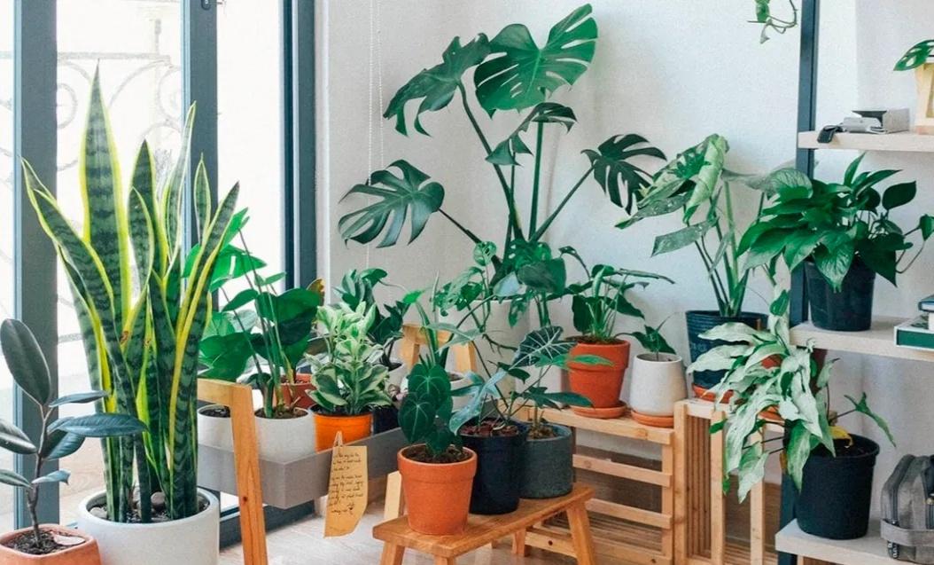 Cinco plantas que la NASA recomienda para purificar el aire de tu casa